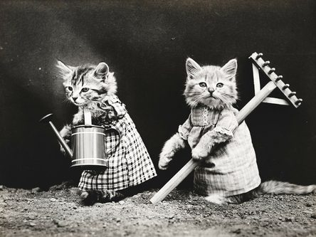 Cats dressed up and gardening