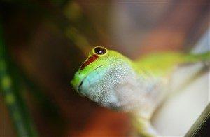 gecko marketing psychology