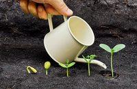 Image of seedlings being watered